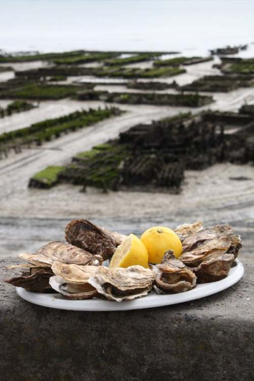 Cancale – France's biggest oyster town