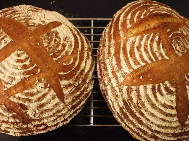 Tartine Bread's semolina loaf